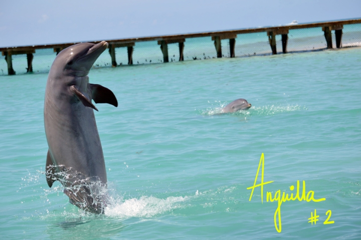 A Piece of Glam, Anguilla, Dolphin Discovery