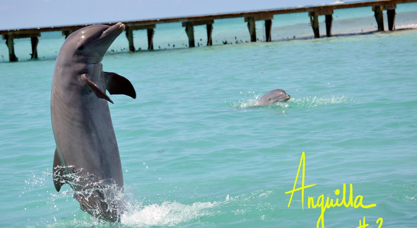 Anguilla, Dolphin Discovery