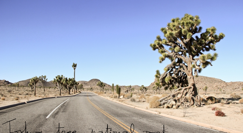 Joshua Tree National Park, The French Dilettante