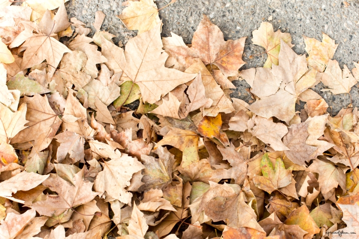 Weekend Inspiration, Feuilles mortes, Automne, Autumn Leaves, A Piece of Glam