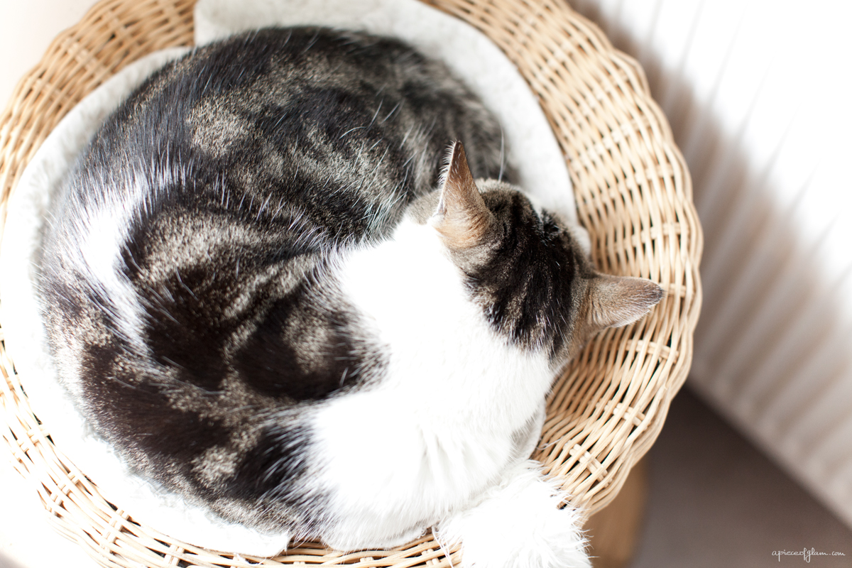 Weekend Inspiration, Sleeping Cat, The French Dilettante